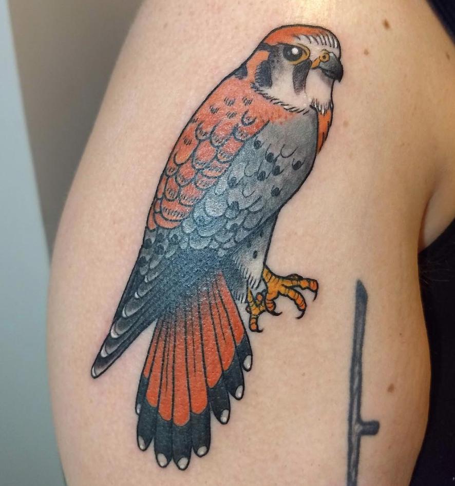 hawk tattoo.png