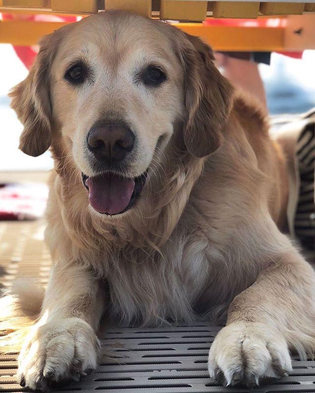Got it made in the shade ☀️ #DogDaysOfSummer