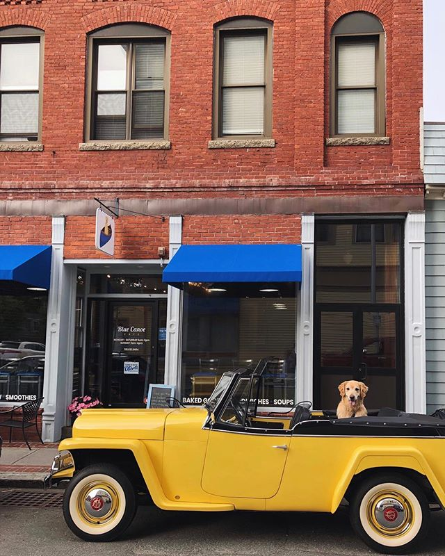 They see me rolling... they barking 🎵 🐾 #RidinFurry @bluecanoemhd