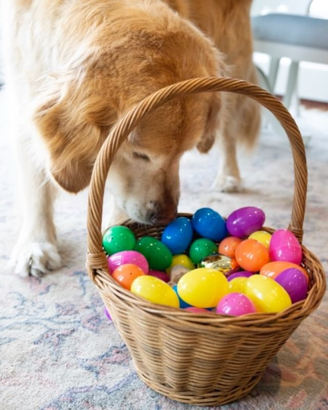Mr. Steal Your Eggs 🐰💯 #HappyEaster