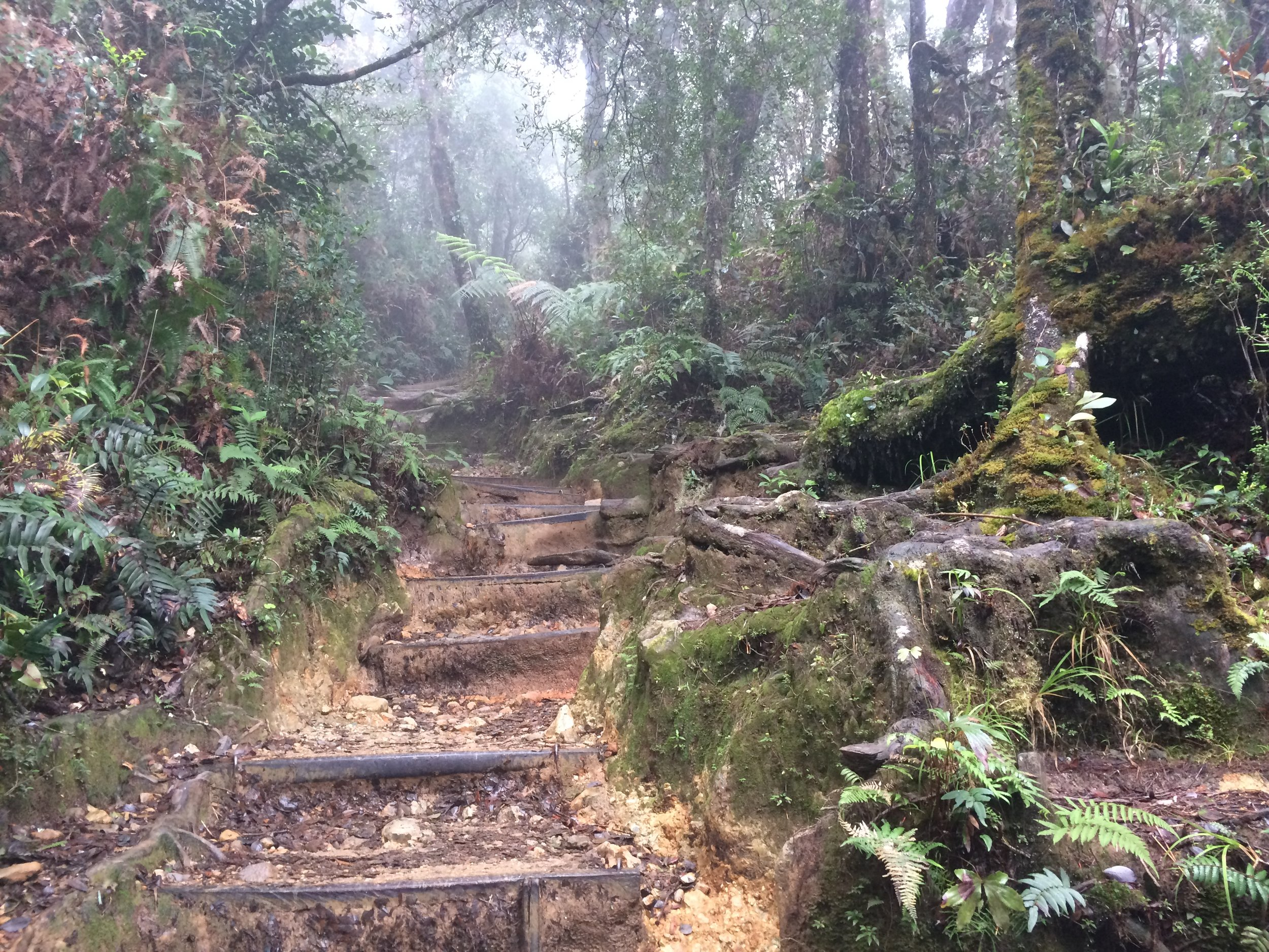 A bit of the trail, at the outset