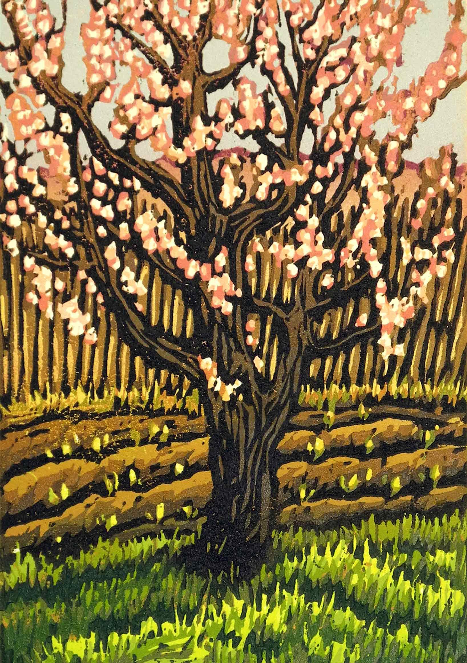 Apricot Tree