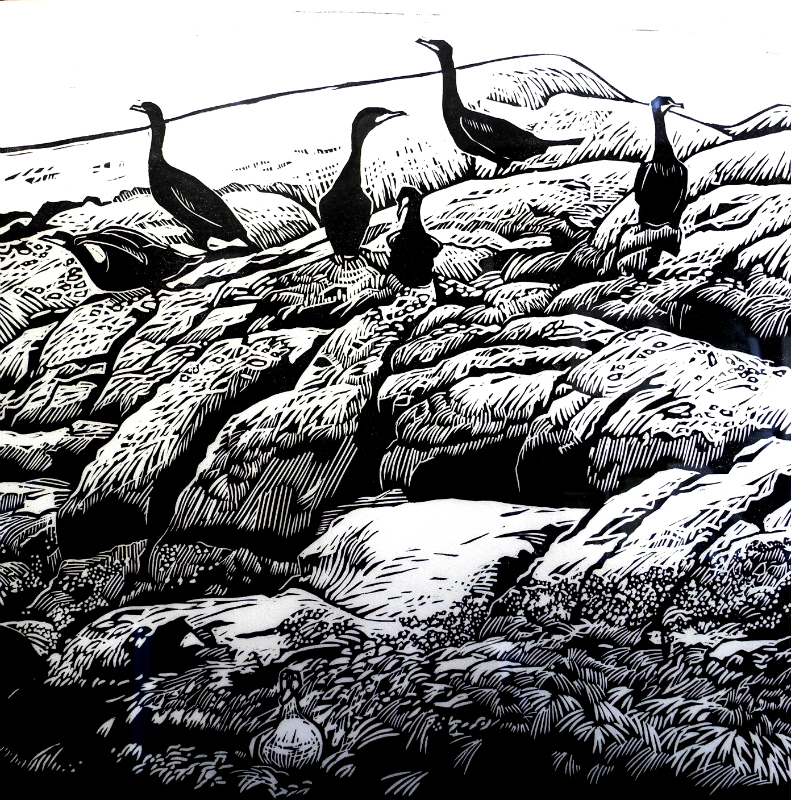 Six Cormorants and a Duck