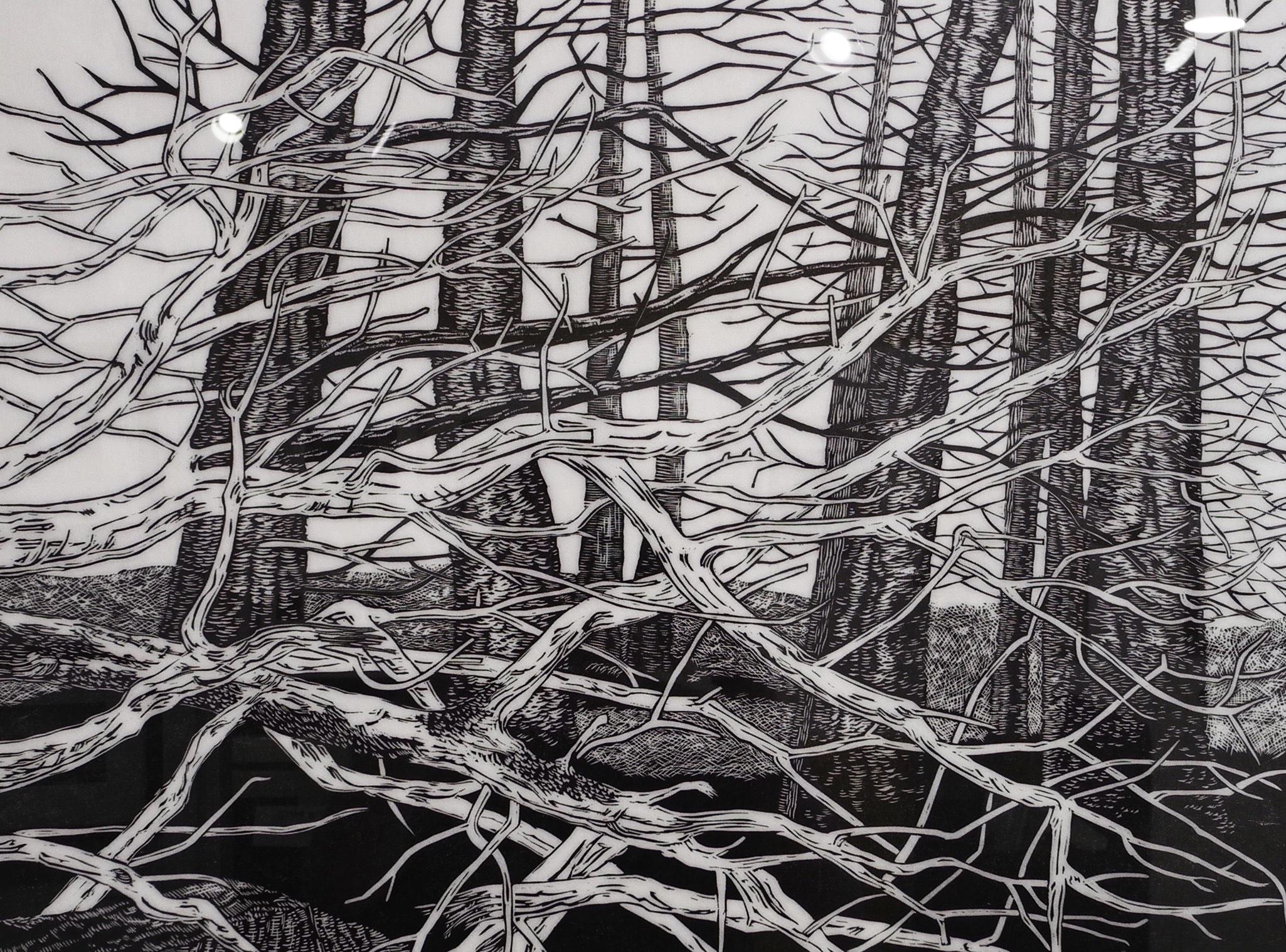 Great Cranberry Isle, Tree Portrait #4