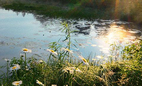 Integrated Pest Management -