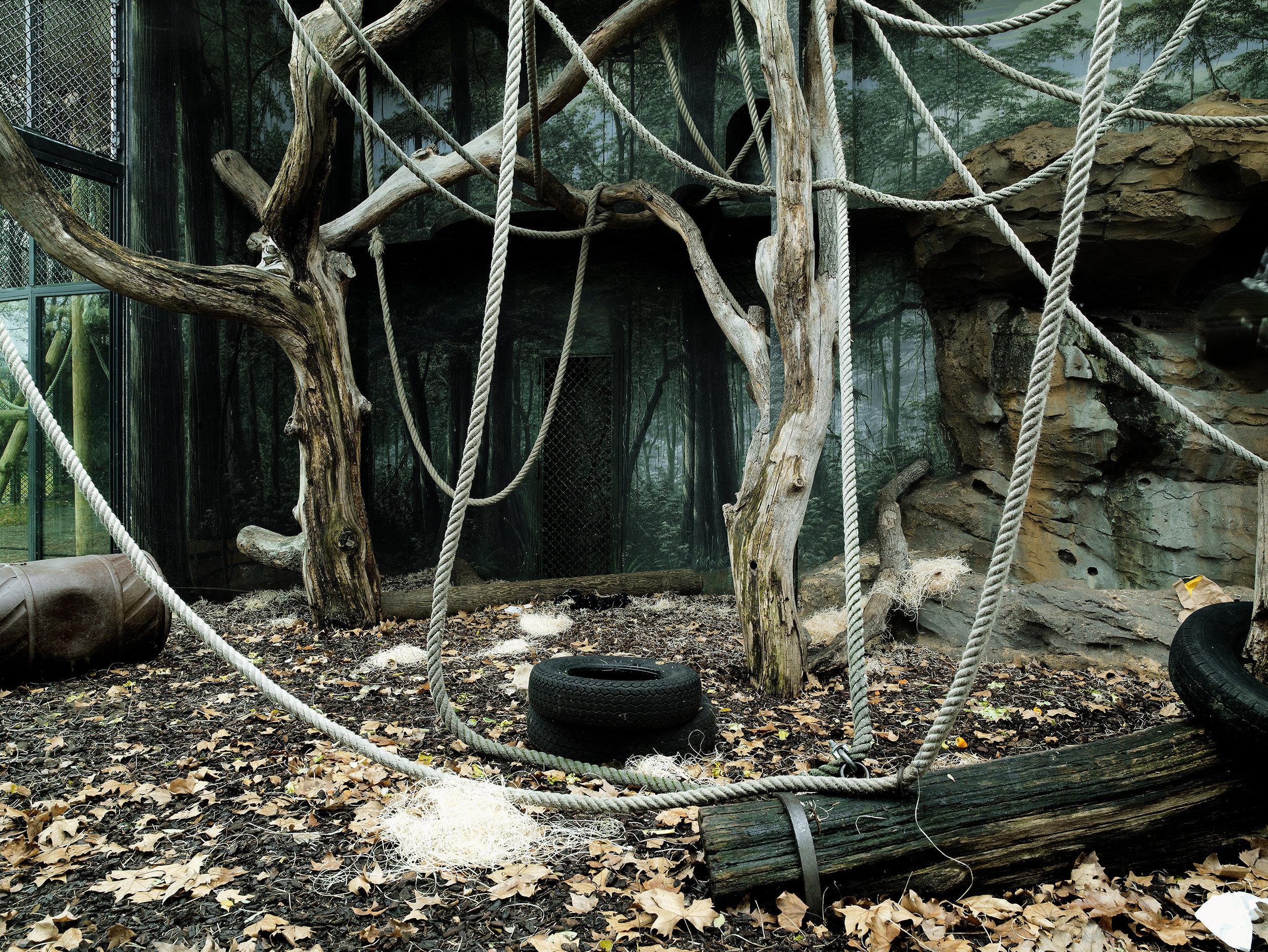 Orangutan cage 2, Jardin des Plantes, France, 2007.