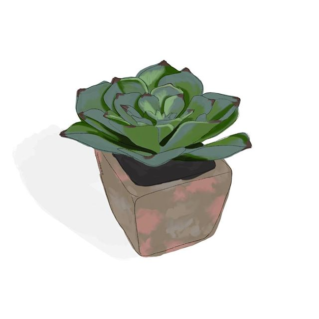 Wish I could keep my plants looking this good😕  Illustrated in Procreate with an Apple Pencil