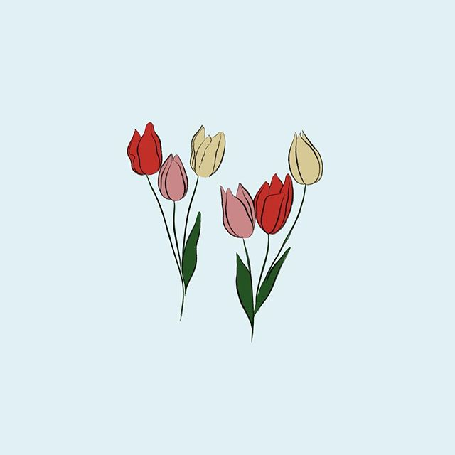 Tulips for my upcoming mural at @coloniecenter 💐