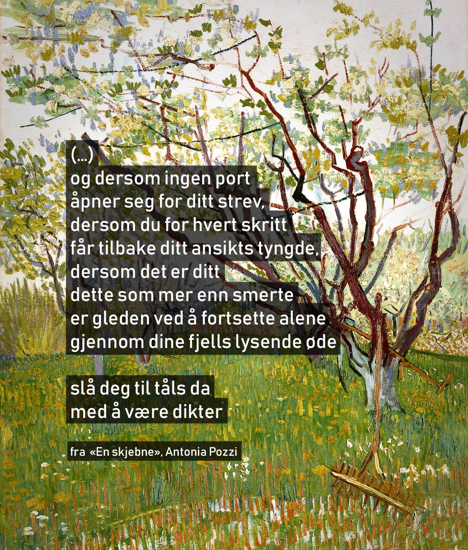 Bakgrunnsmaleri:  Kirschbaum , Vincent van Gogh (Wikimedia Commons)