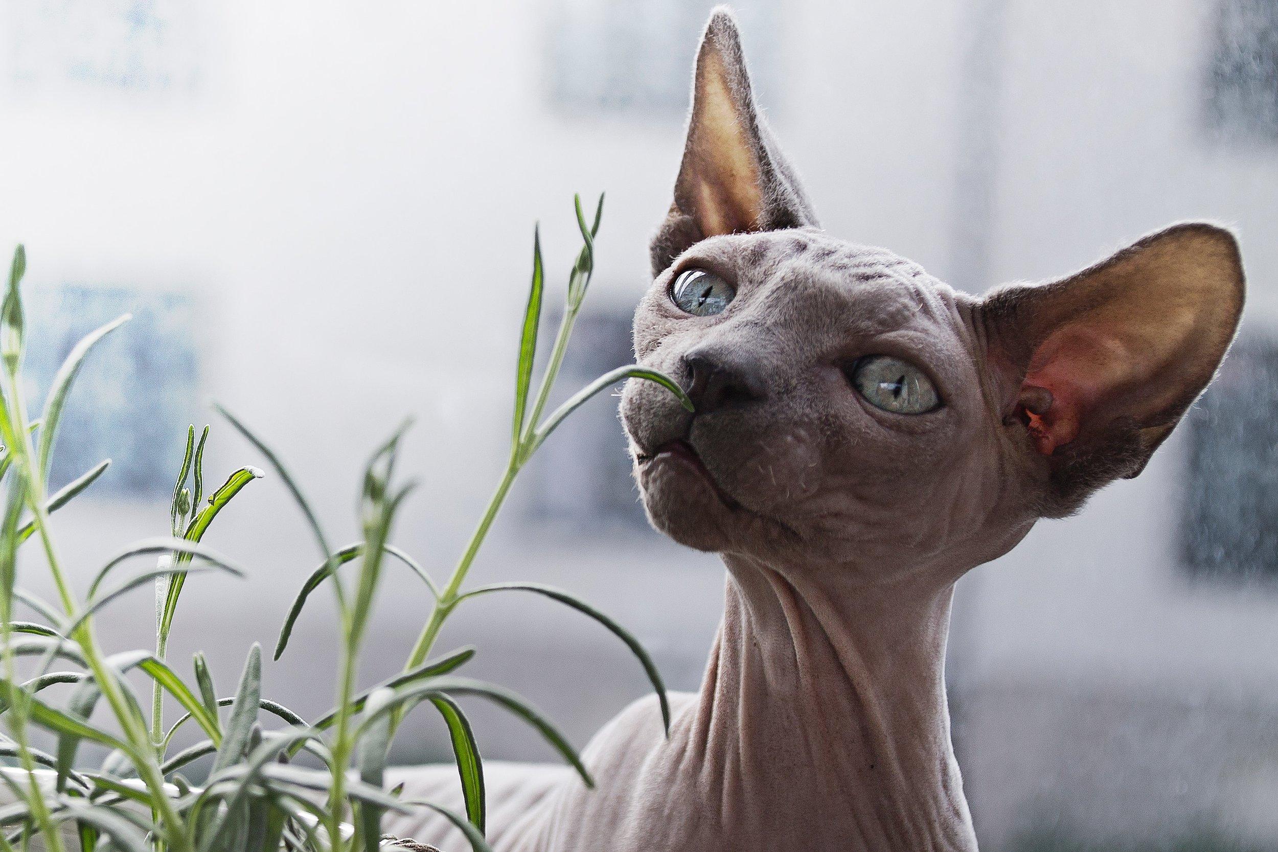 Foto av  Linnea Sandbakk . Eller, foto er av en katt, daaaa.