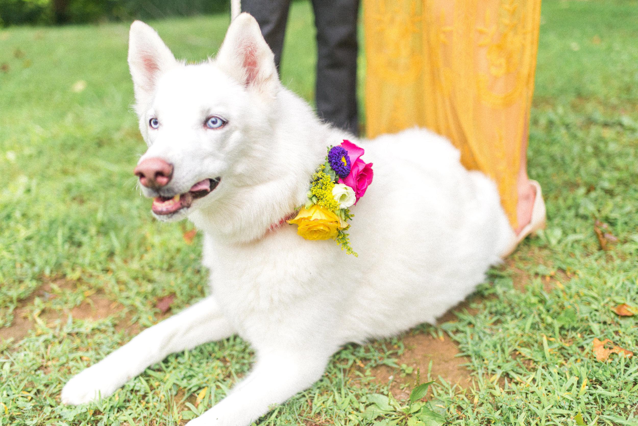 Wedding Dog Copyright Rock Paper Sisters