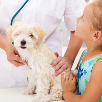 lomond-vets-pet-care-plan.jpg