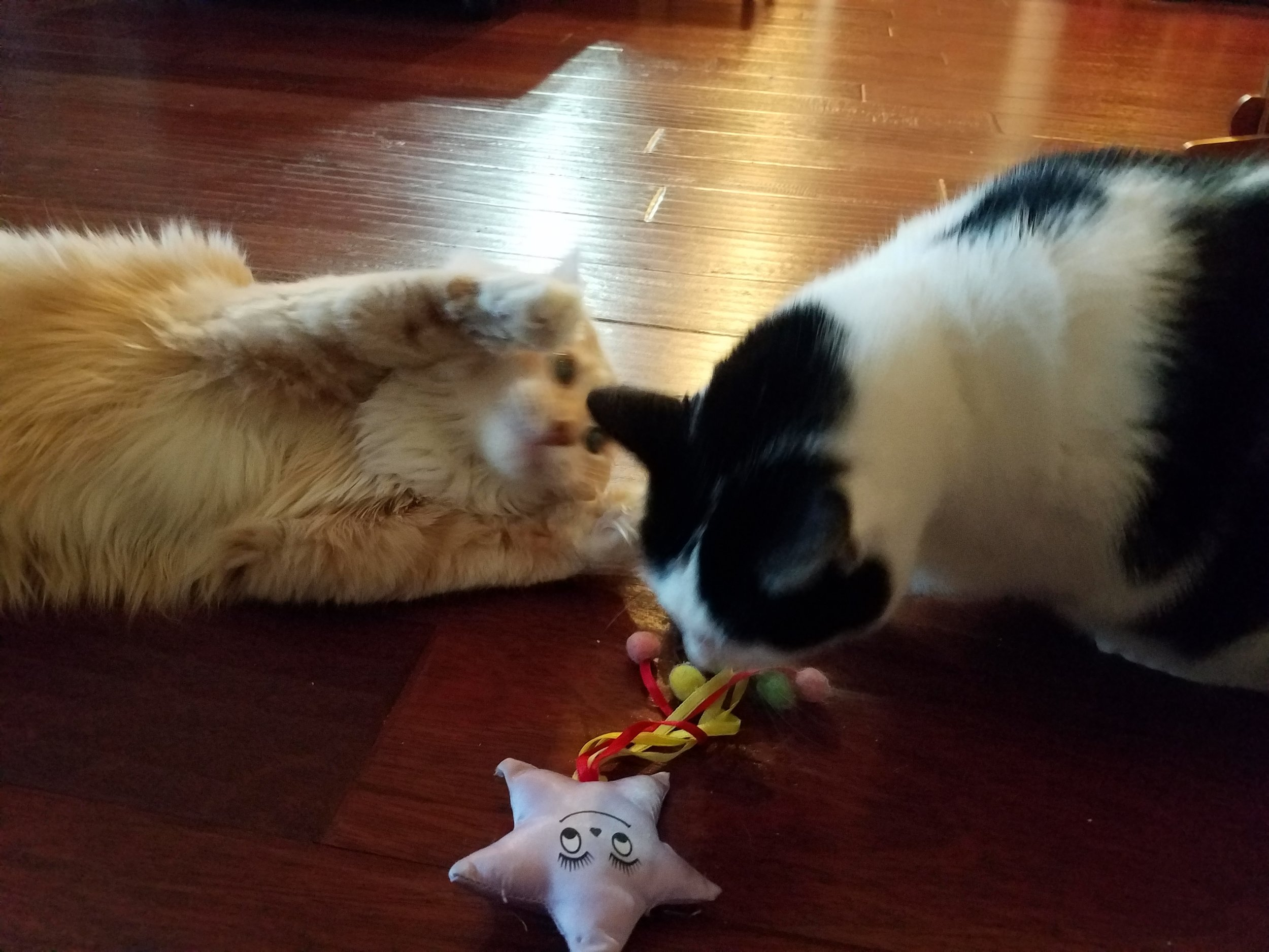 Playtime with Nikita and Jean-Luc.