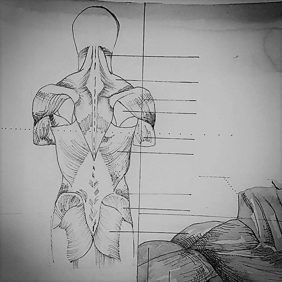 anatomy back .jpg