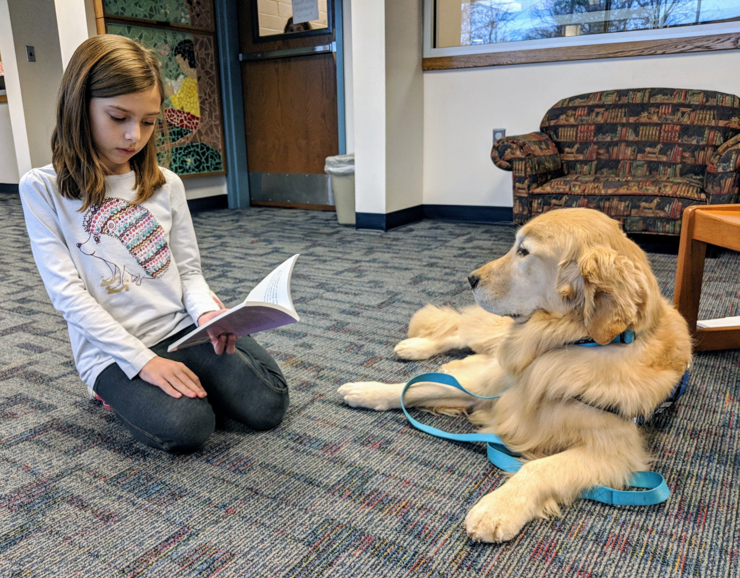 Neeko is a golden retriever who is part of the Ruff Ruff Reading program.