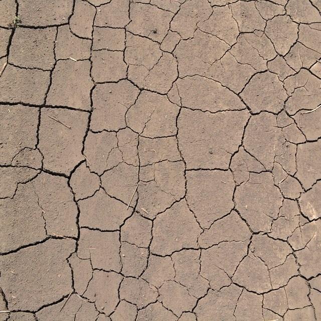 dry-dirt1.jpg