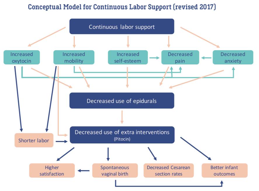 Doula Conceptual Model.png