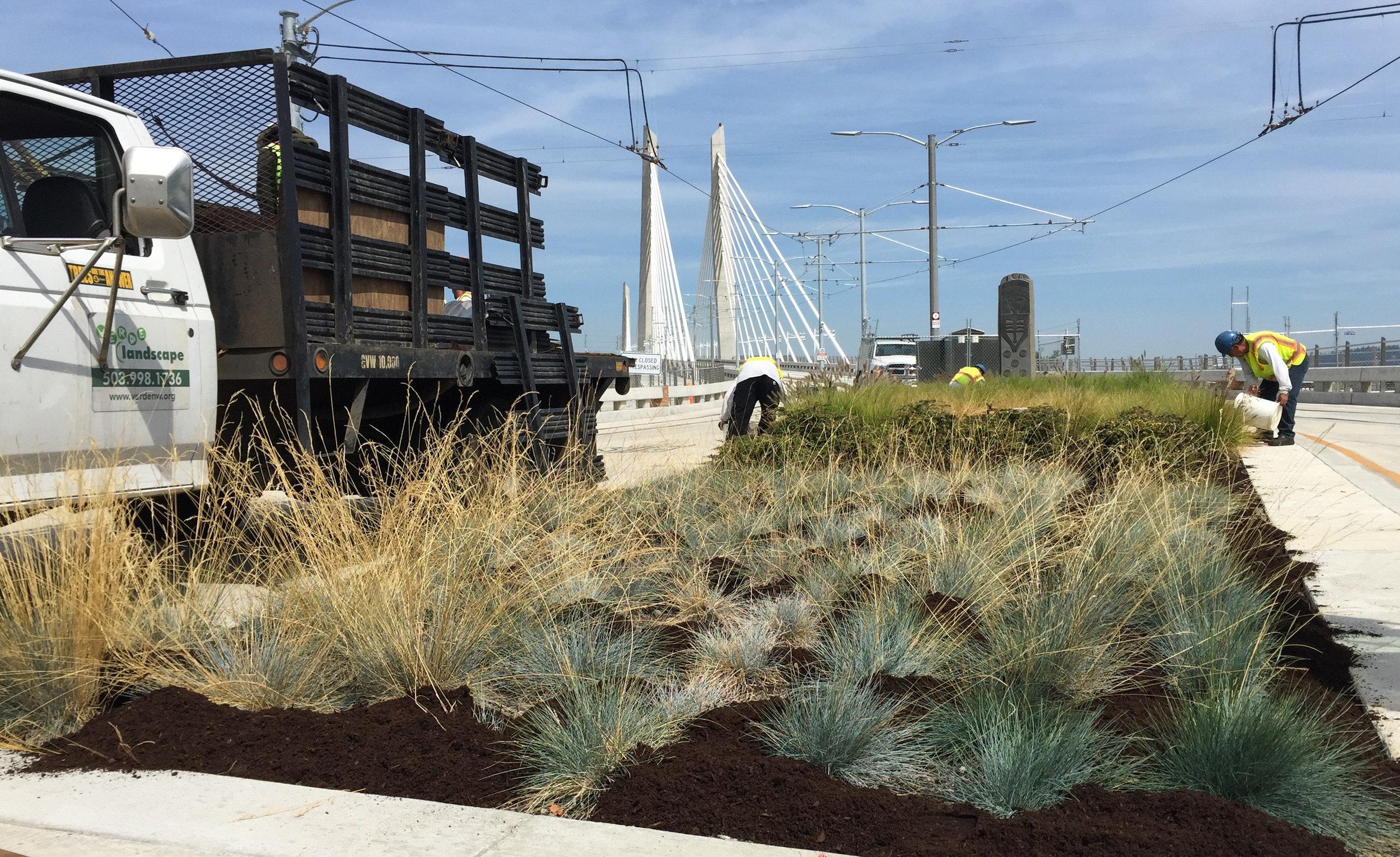 Verde Landscape provides maintenance for the green features of the Tilikum Bridge.