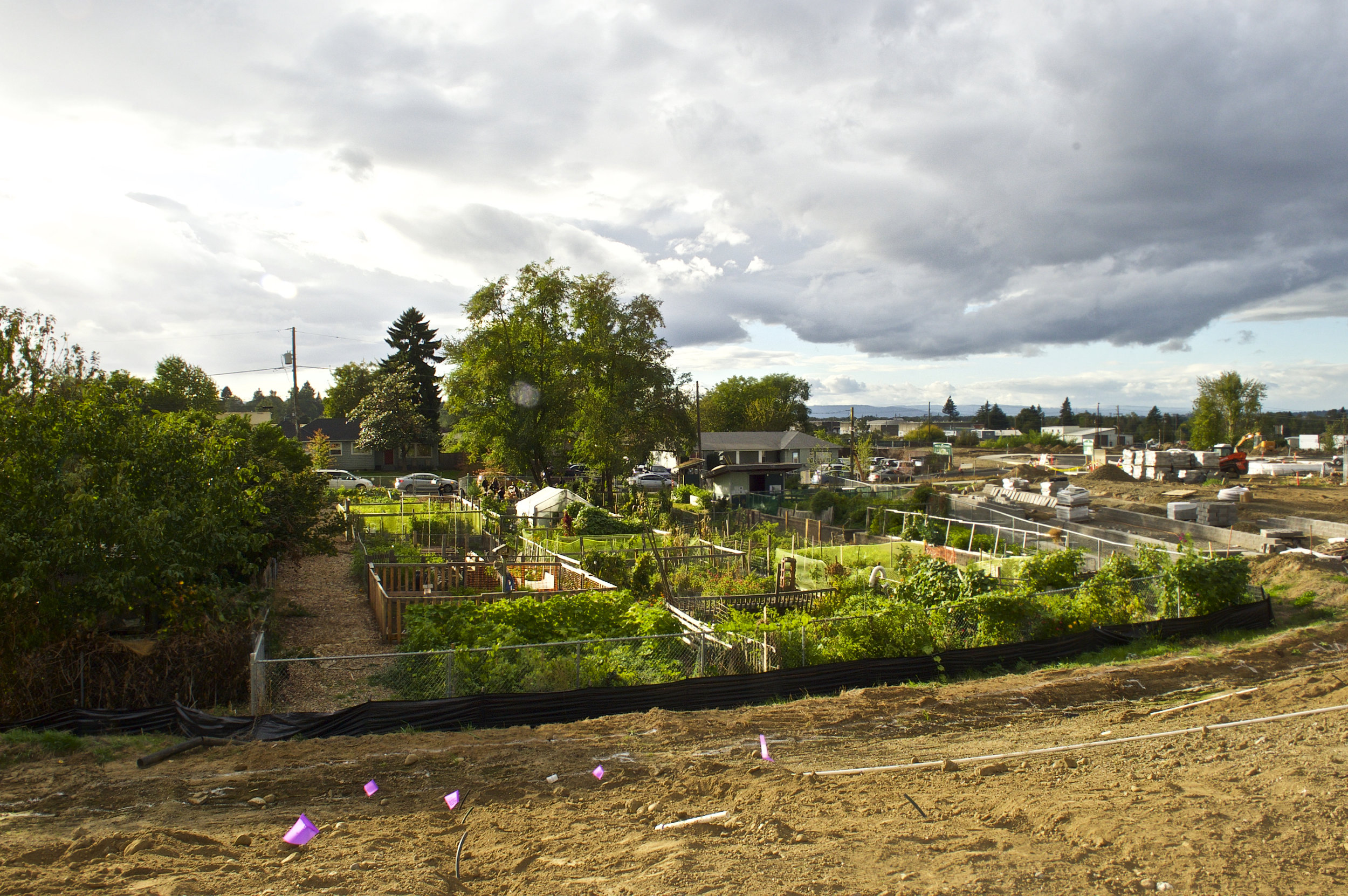 The view of the 72nd Community Garden from the Native Gathering Garden. Naim Hasan Photography.