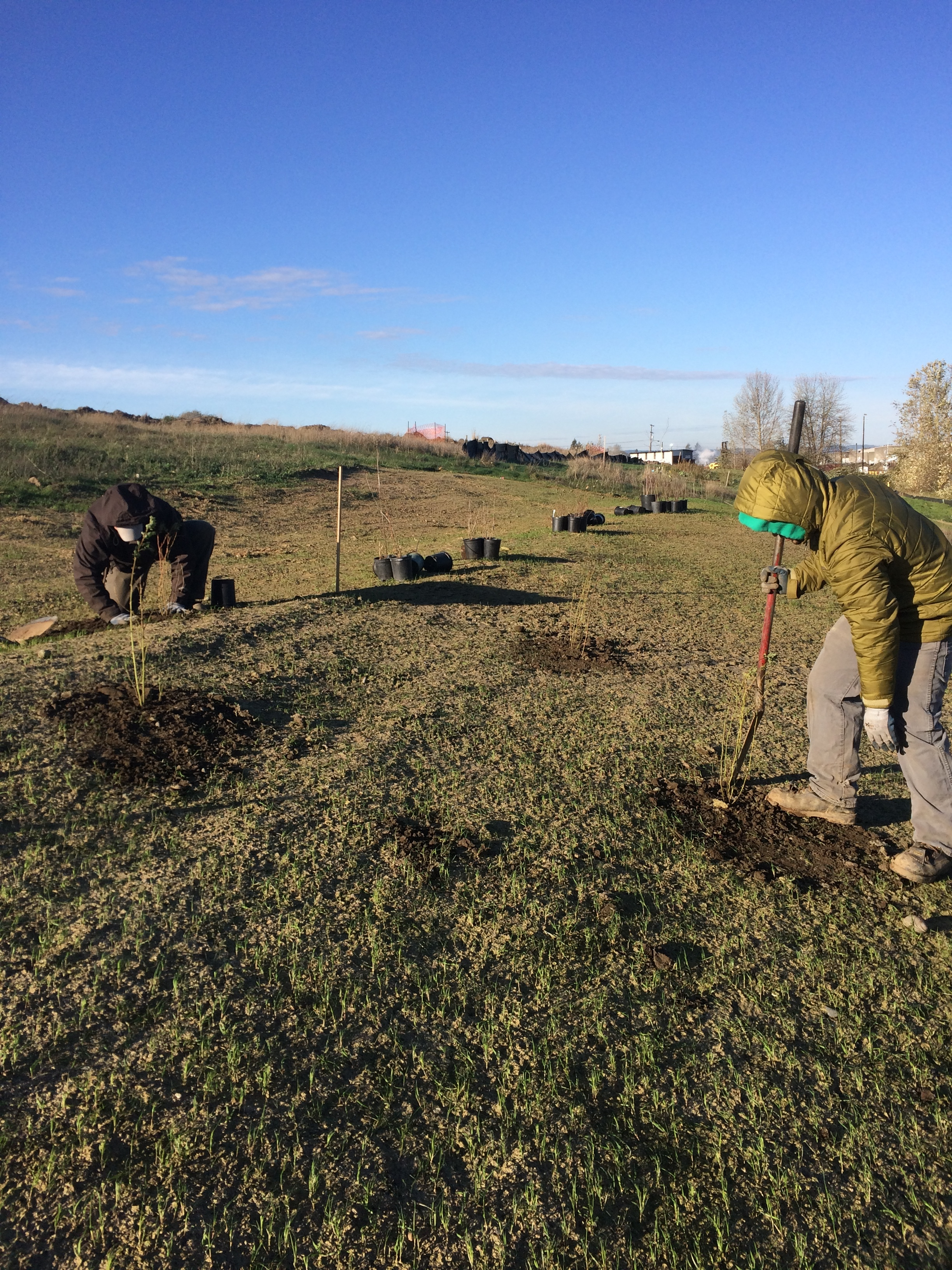 Landscape Crew members install native plants along the North Slope.