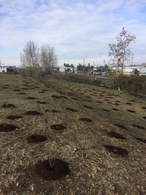 Verde Landscape installed mixed shrubs on 10 berms along the North Slope.