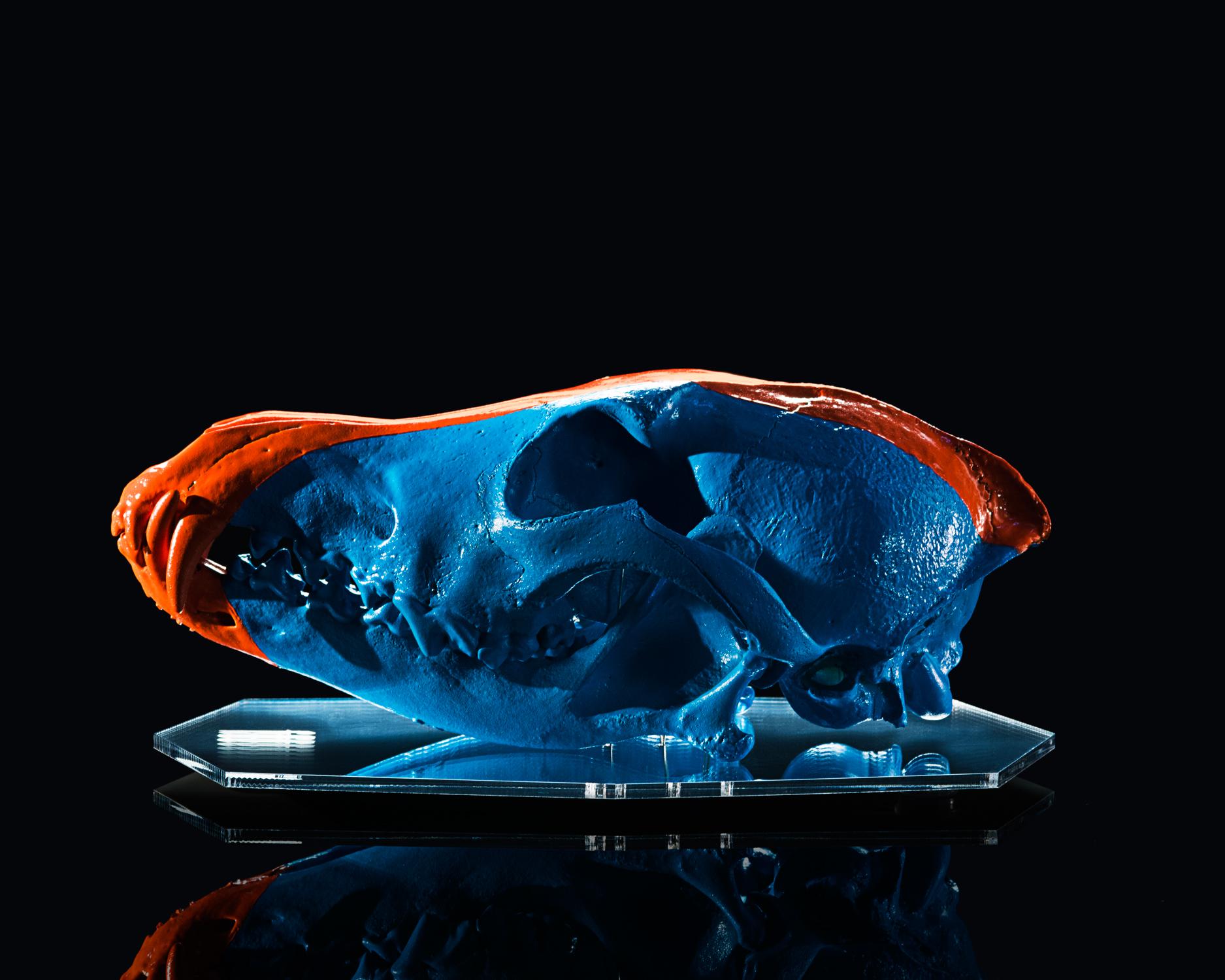 Blue & Orange - Coyote