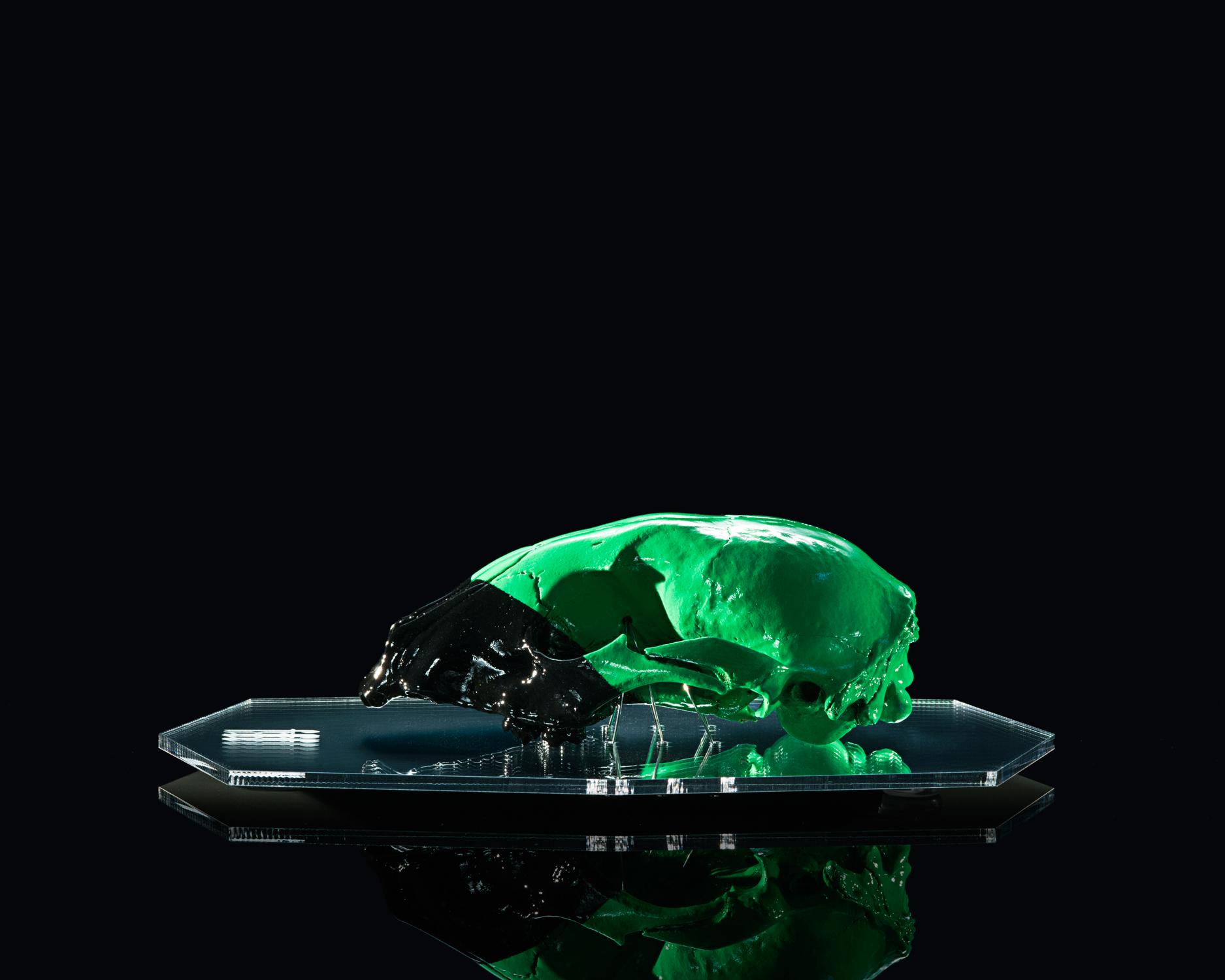 Green & Black - Racoon