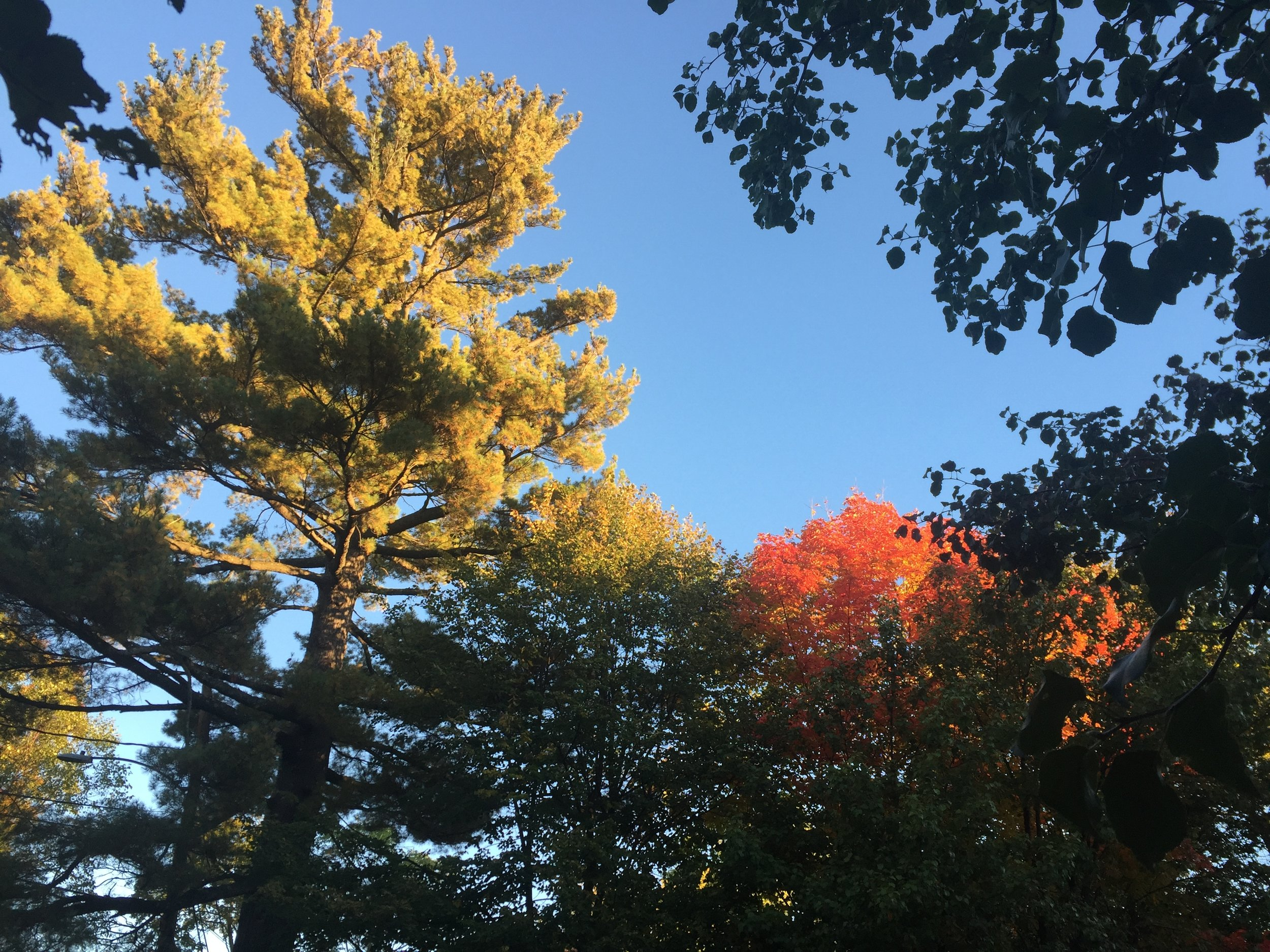 weston trees.jpg
