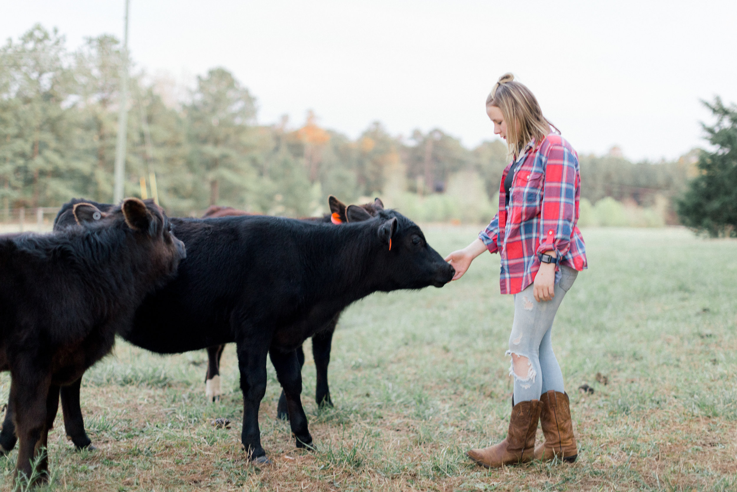 cows atlanta darian reilly photography-11.jpg