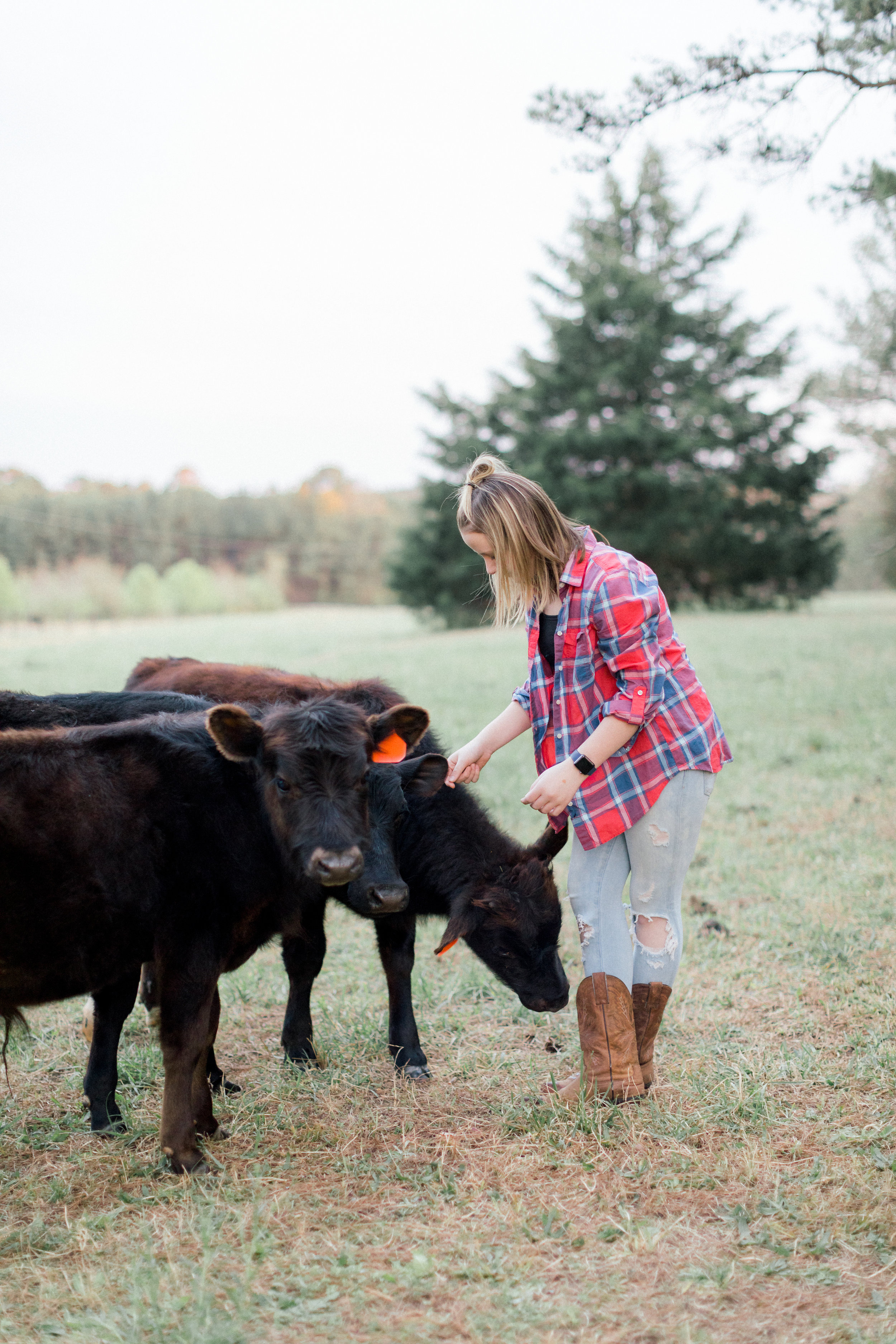 cows atlanta darian reilly photography-20.jpg
