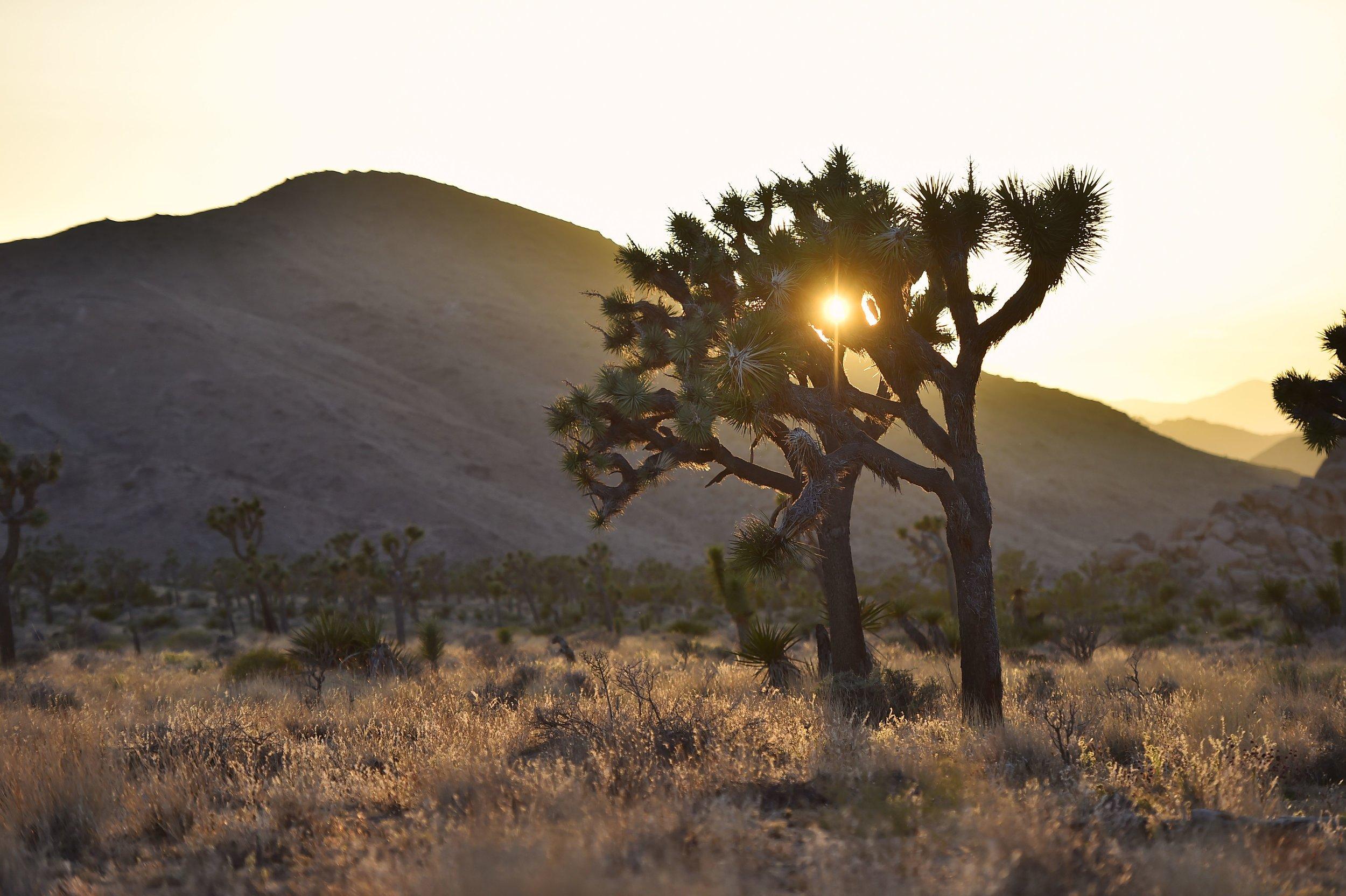 Warmth - Joshua Tree, CA