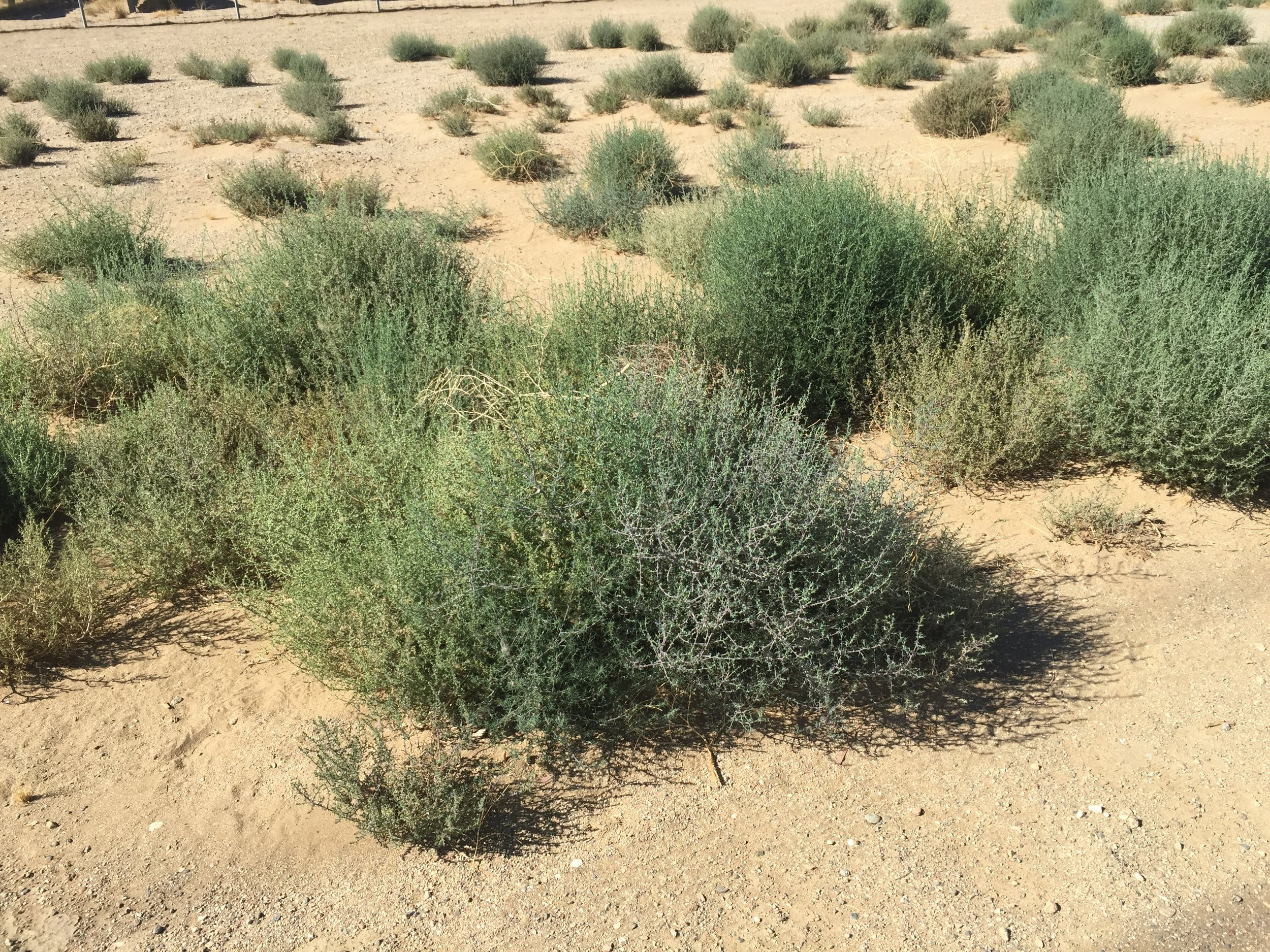 Plants growing in a open area