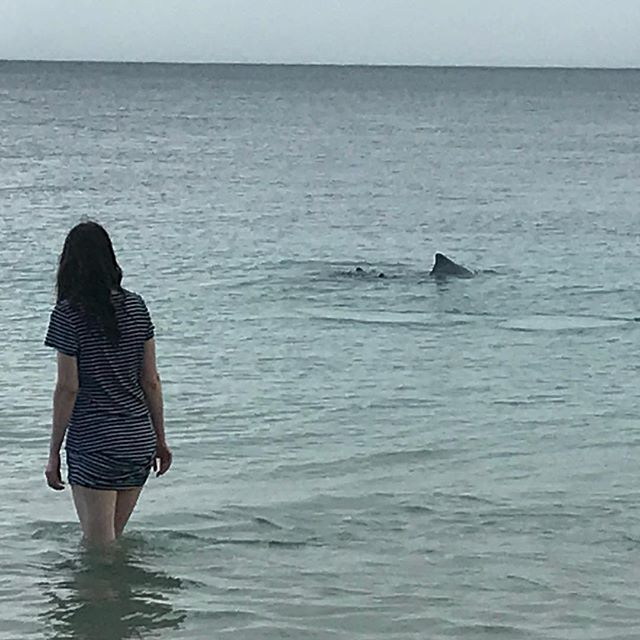 Dolphins putting on a show for Dubbo visitors. #gooriemookatours
