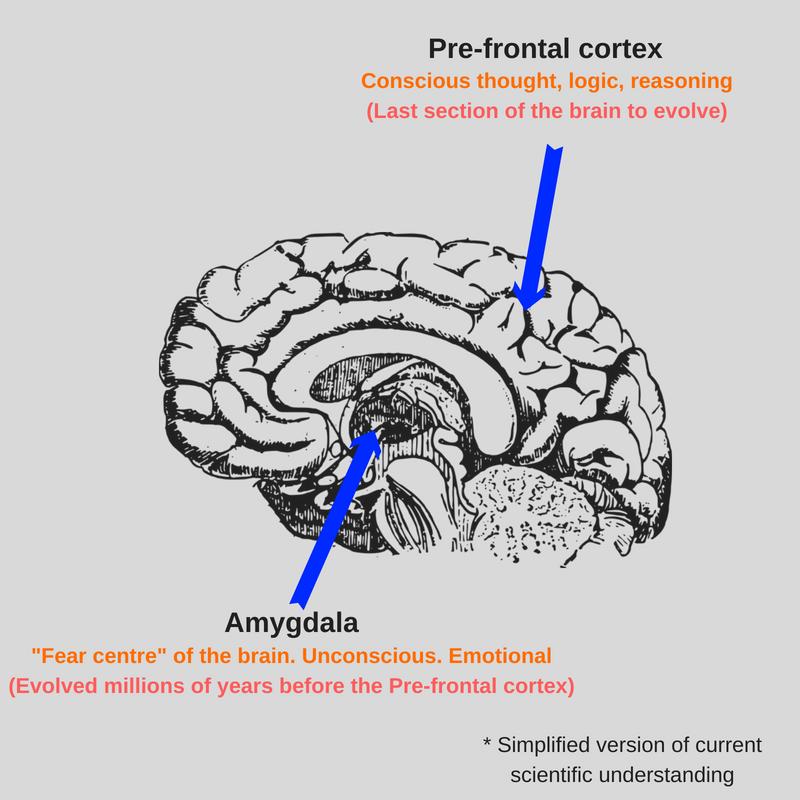 Danger Perception News Market Brain Diagram.png