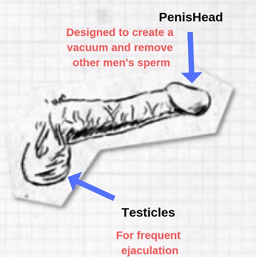 How the media shaped your idea of love penis diagram.png