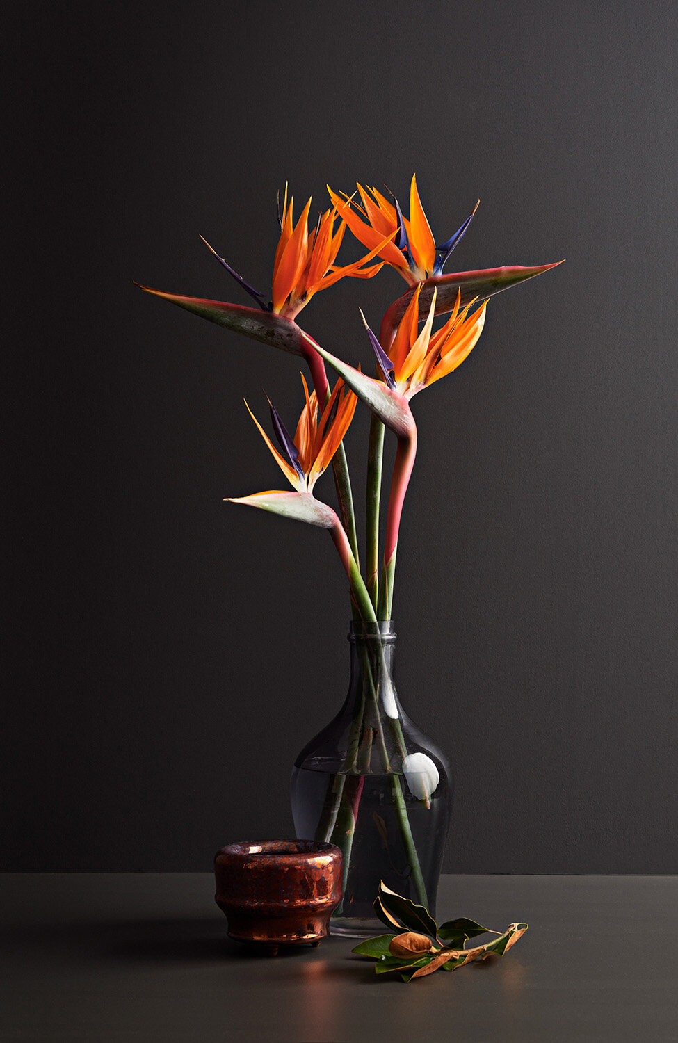 IVDM Photography_NZ Flowers week_Black.jpg