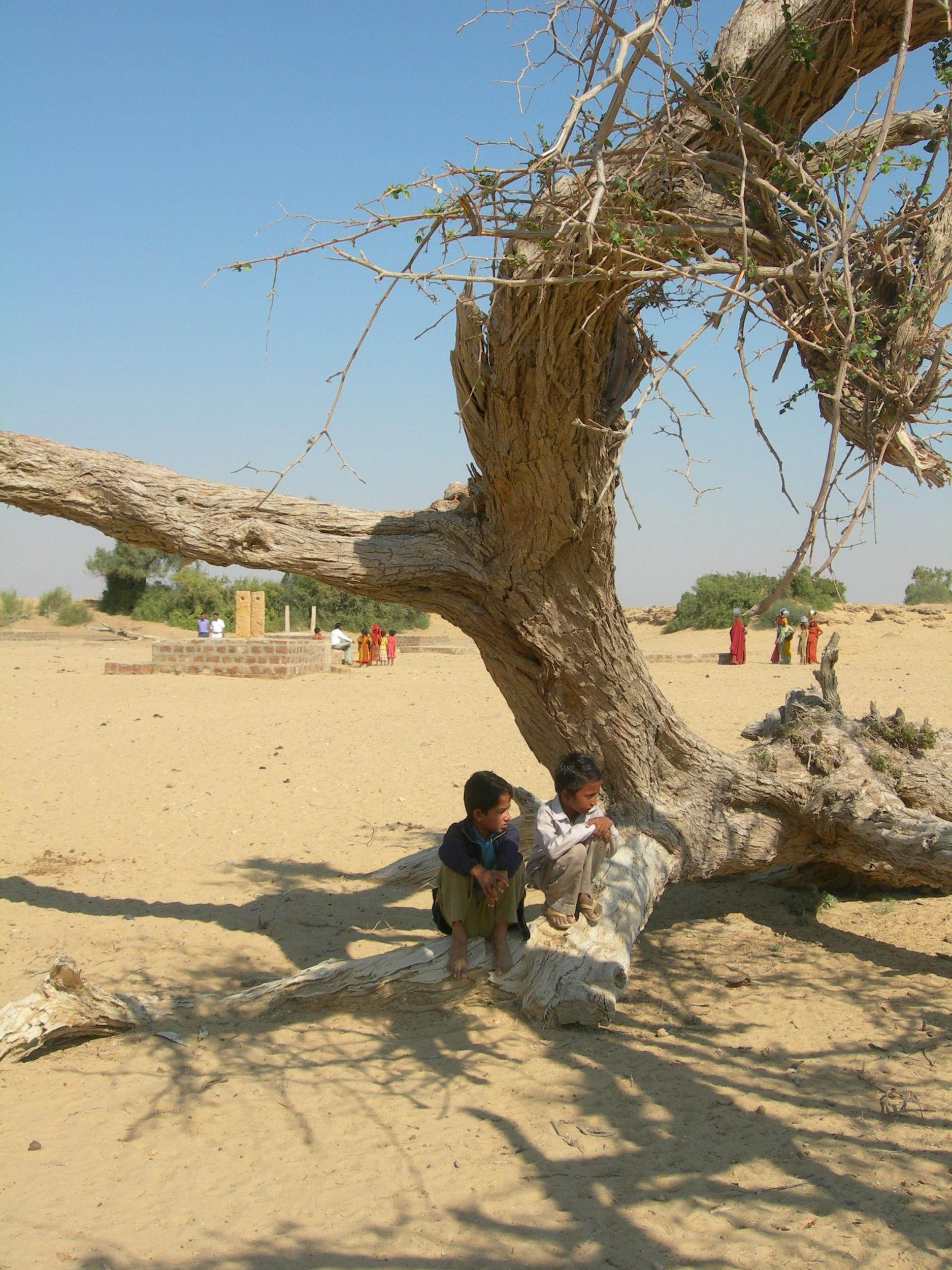 4 Tree.JPG