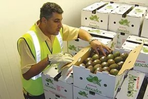 Ripening - Once we've secured a reliable and consistent supply of high quality fruit and vegetables, we need to make sure it reaches the customer in peak condition. Controlling the ripening process for specific lines is a vital part of achieving this goal.