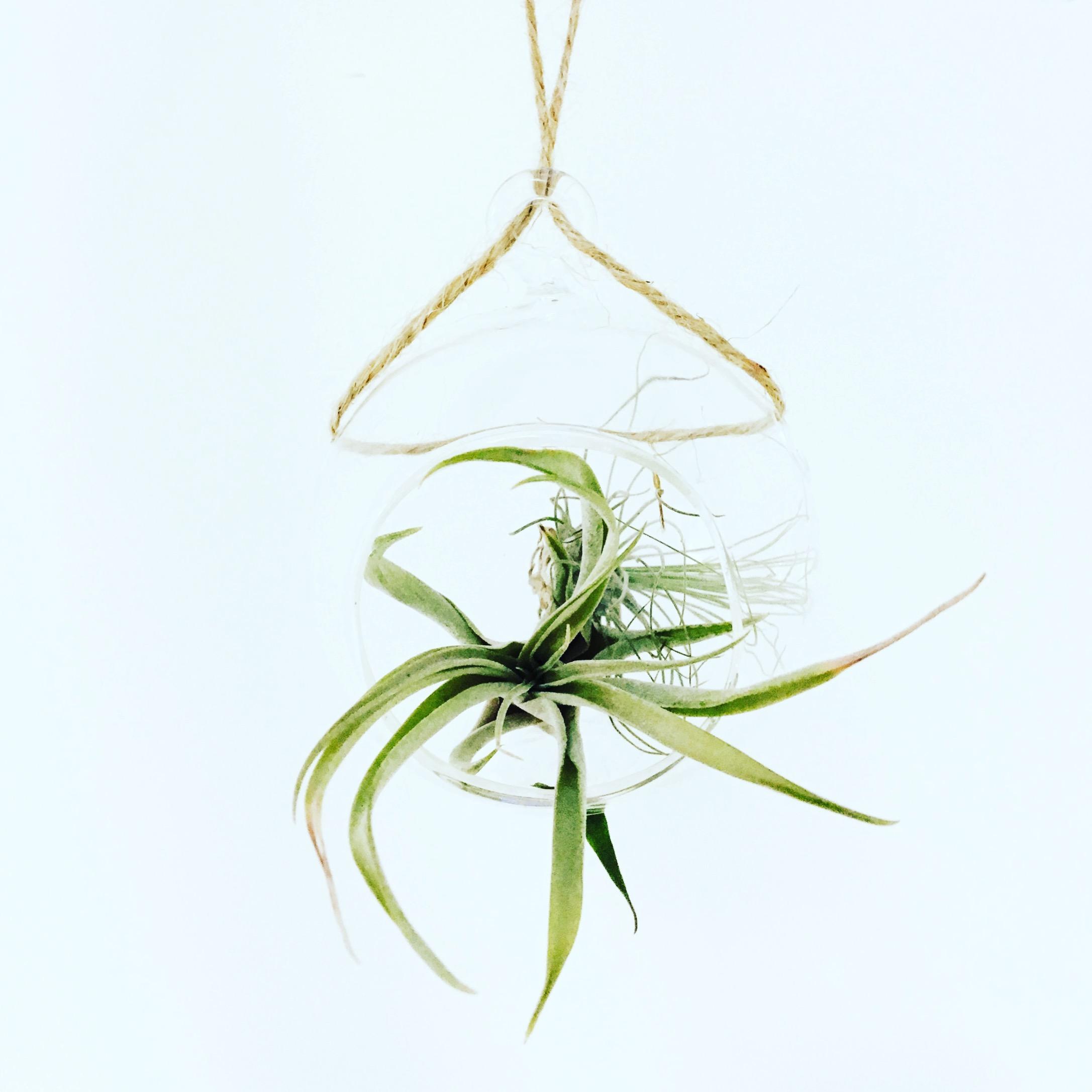 Hassle free botanicals -