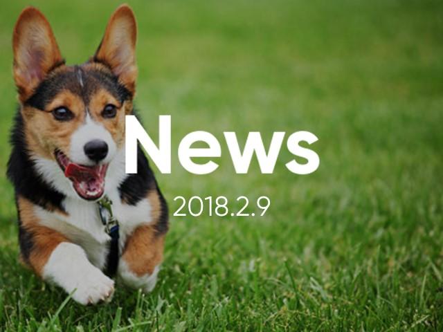 News_cocoya