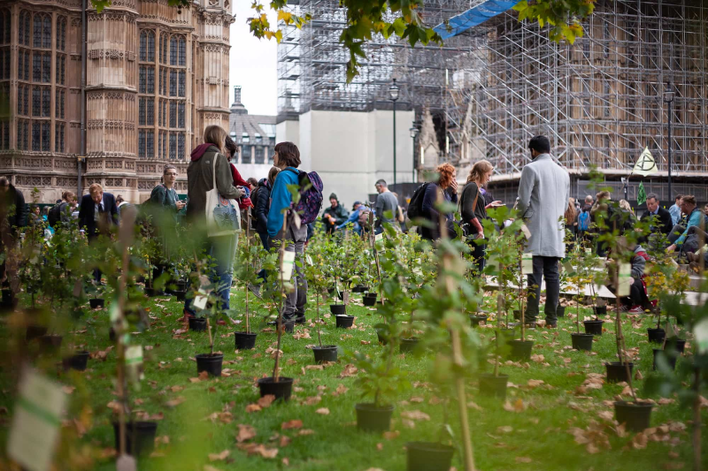 """Many trees were planted in Westminster today"""