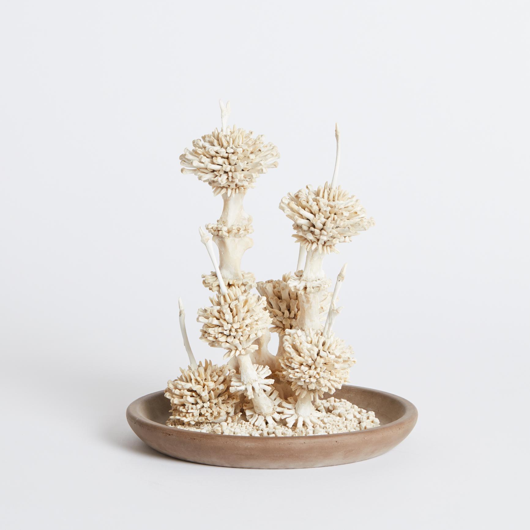 Flora 2017, Bone, Earthenware, C. Charlotte Oldman