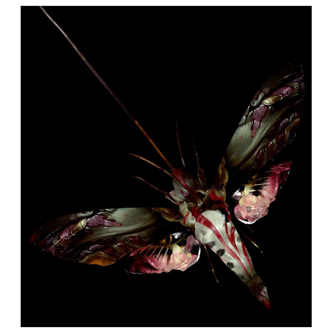 Sphinx_Moth2.jpg