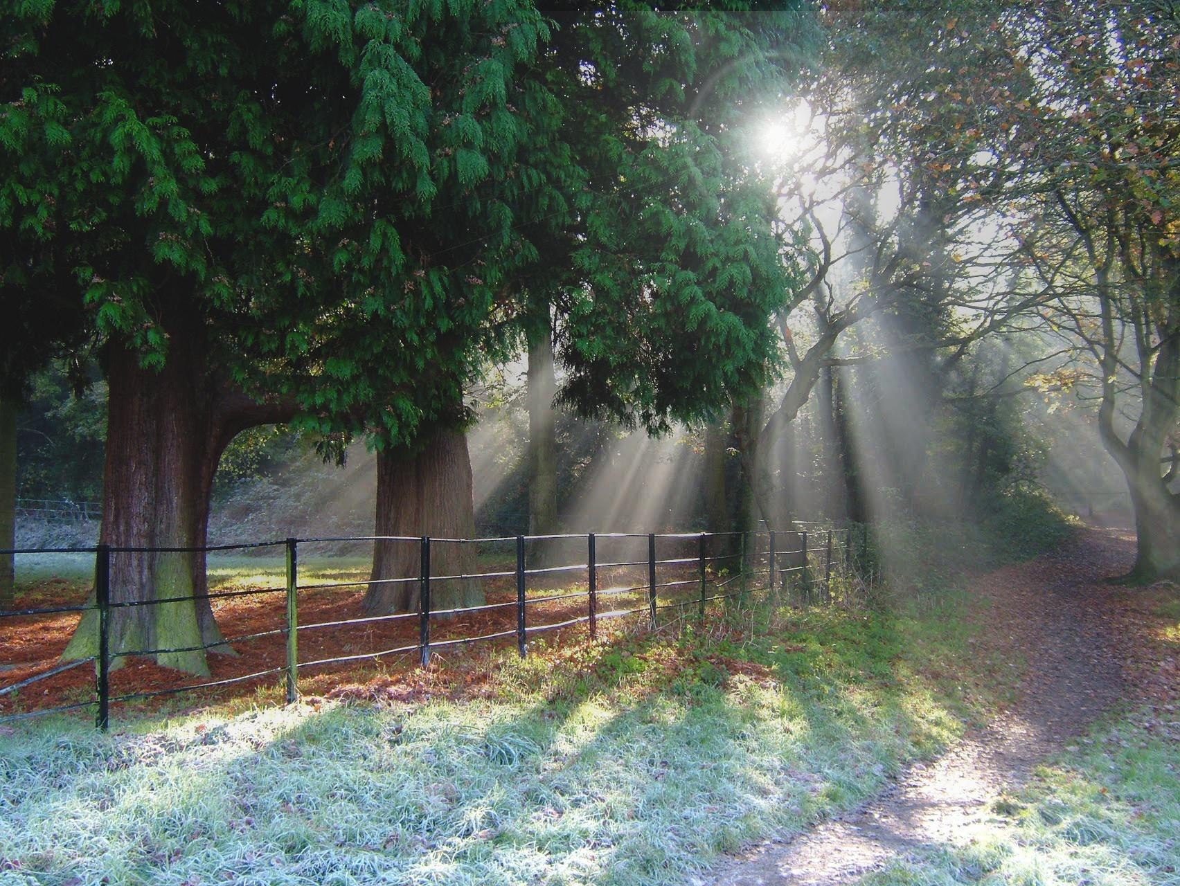 Naturligt-lys-i-skoven.jpg