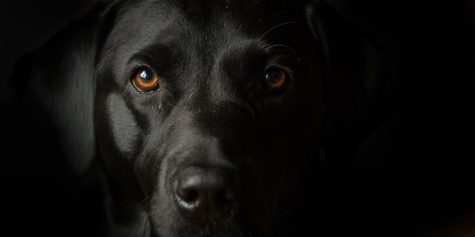 National-Black-Dog-Day.jpg