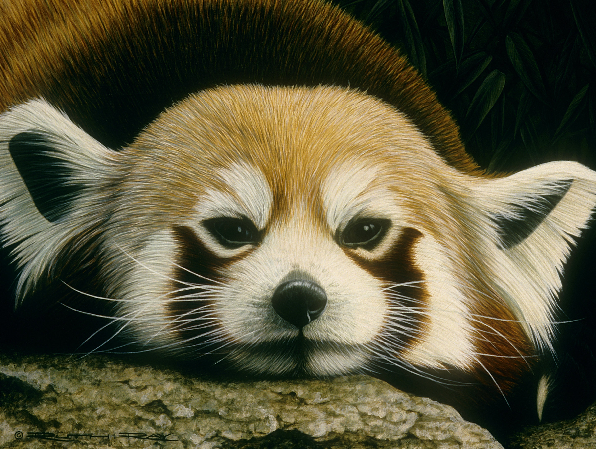 The Good Place_Red Panda.jpg