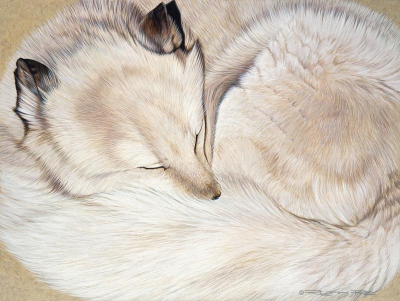 Long Winter's Nap - Arctic Fox12