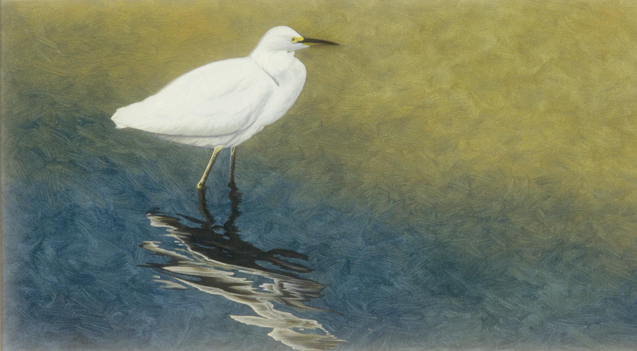 Edging In - Snowy Egret16