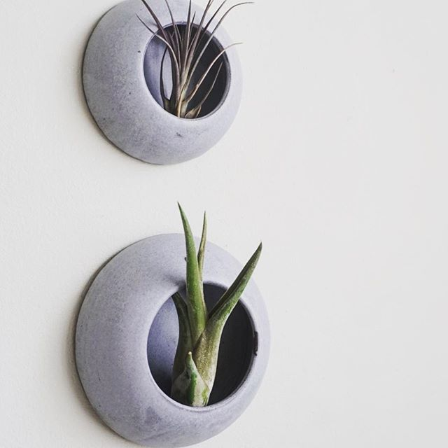 One of the most frequent questions about these #barnacles is how to hang them. It's quite simple. It has a hole in the back! 😉 . . . . . . . ——————————————————— #mudtolife #mtl #handmadeceramics #handmade #madeinusa #madeinny #buysmall #simpleliving #makermovement #buylocal #contemporaryceramics #contemporarycraft  #minimalism #ilovepottery #clay #pottery #slowliving #wallhanging #wallhangings #wallplanter ———————————————————