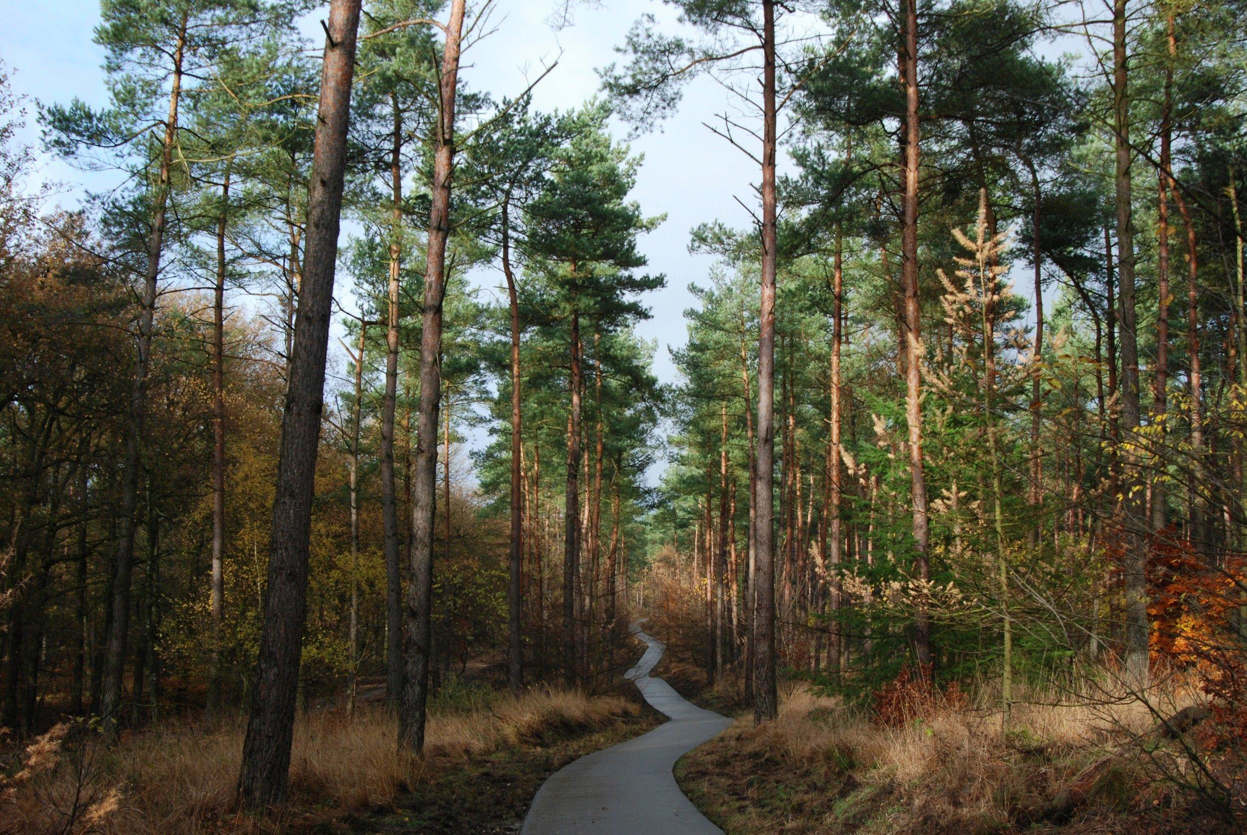 forestpath2.jpg